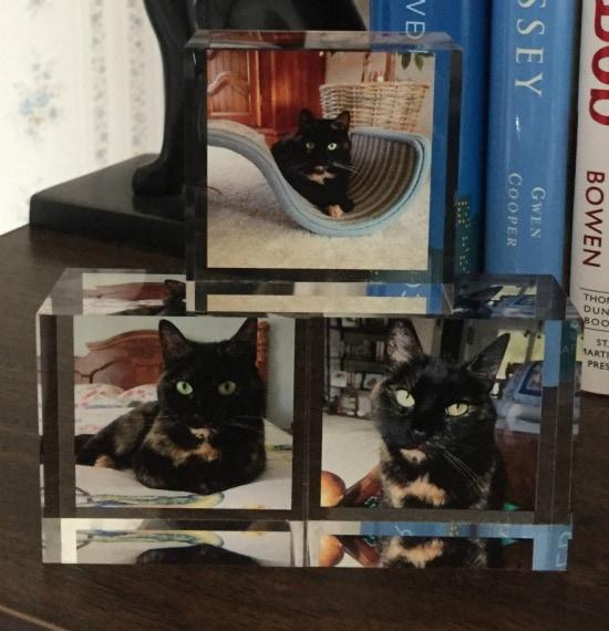 photo-blocks-cat