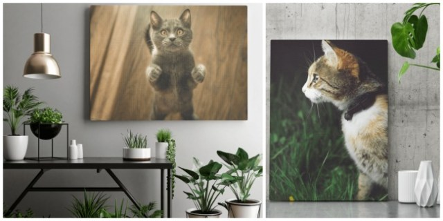 cat-photo-canvas-print