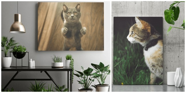 cat-photo-canvas-print