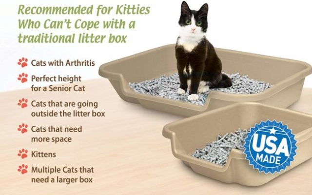 senior-cat-litter-box