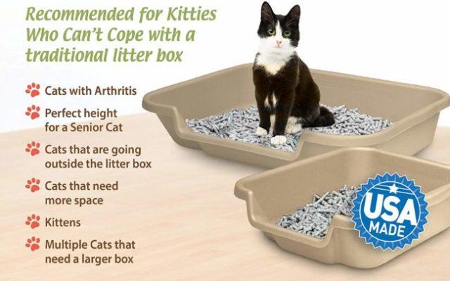 senior-cat-litter-box