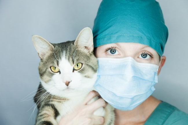 corona-virus-cat