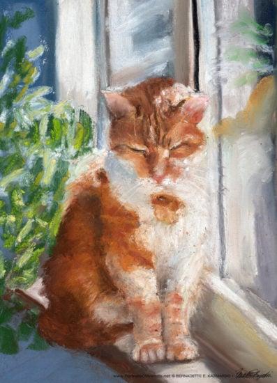 cat-window-sun