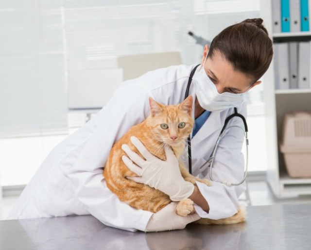 cat-covid-19-science