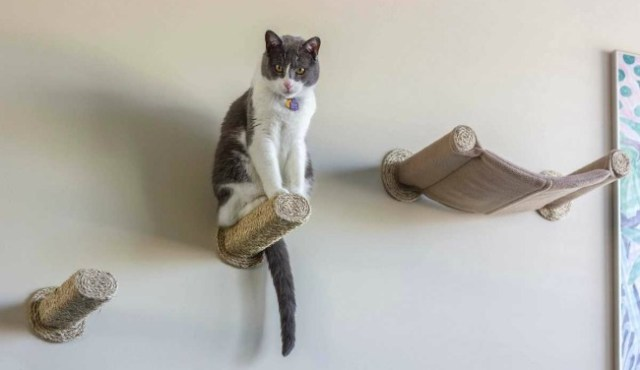 cat-hammock-wall-mounted-cat-bed-with-2-sisal-steps