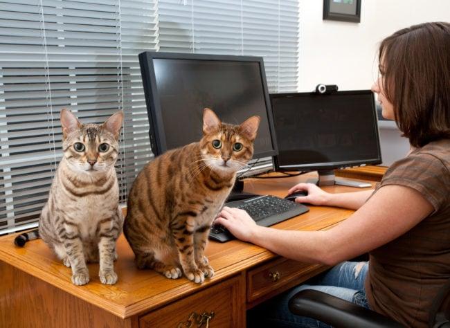 cats-desk-computer