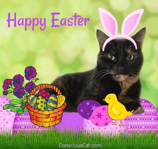 easter-cat