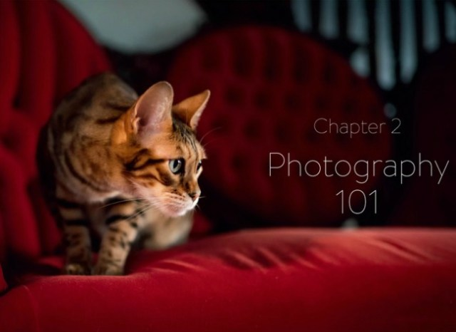 cat-photography-101