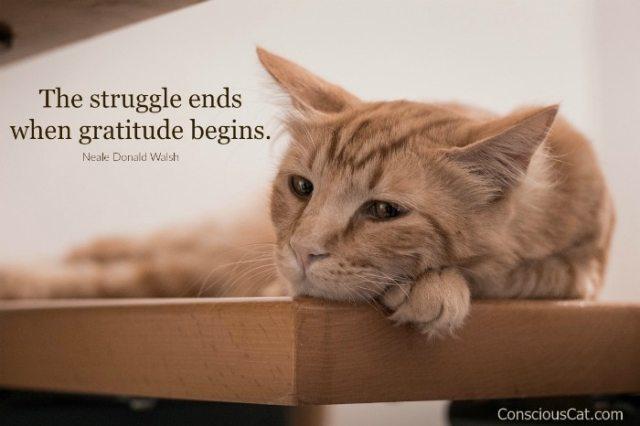 gratitude-pandemic-cat