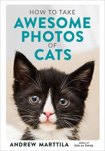 how-to-take-awesome-photos-of-cats