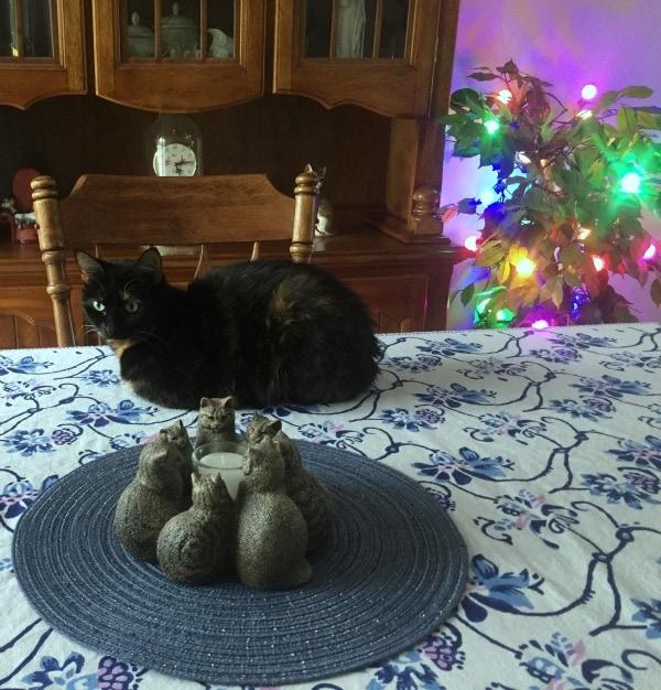 globe-lights-cat