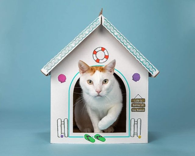 cat-beach-house