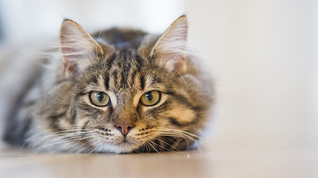 cat-fip-covid-drug