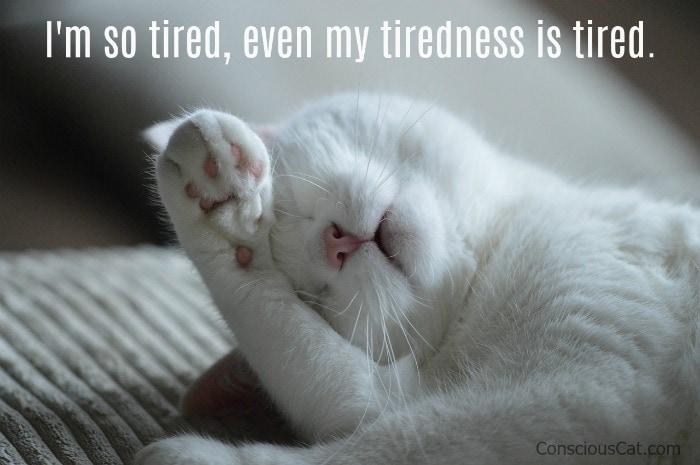 cat-sleeping-tired