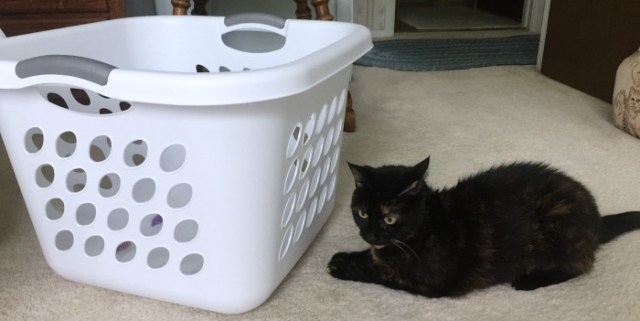 laundry-basket-cat-game