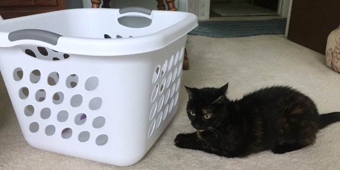 laundry-basket-cat-game