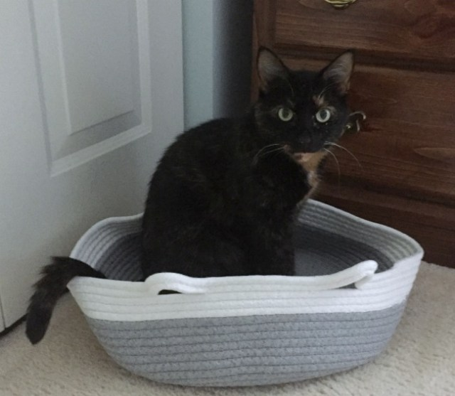 cotton-rope-cat-bed