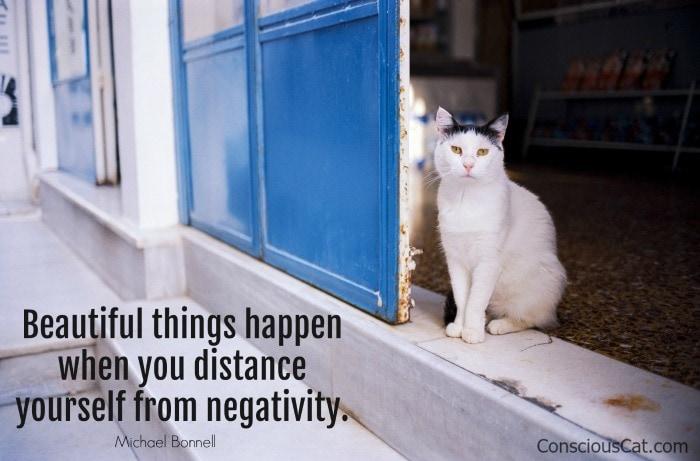 beautiful-cat-distance-negativity