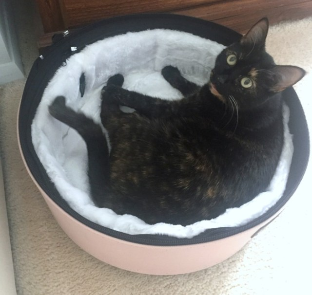 Sleepypod-mobile-pet-bed
