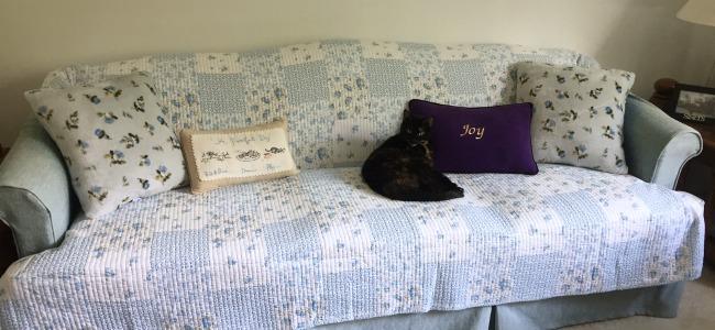 tortoiseseshell-cat-sofa