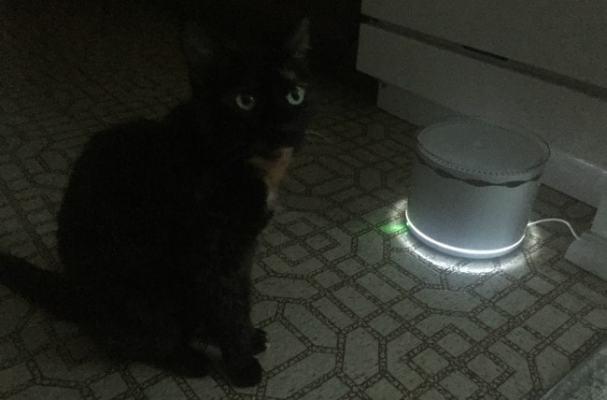cat-fountain-nightligh