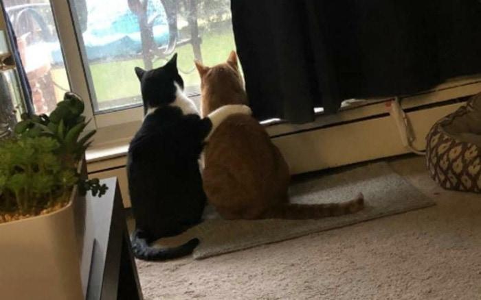 cat-comfort-hug