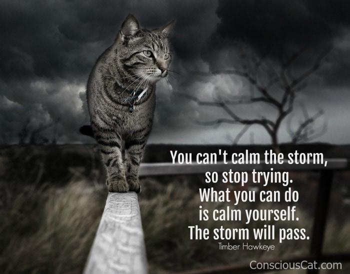 cat-storm