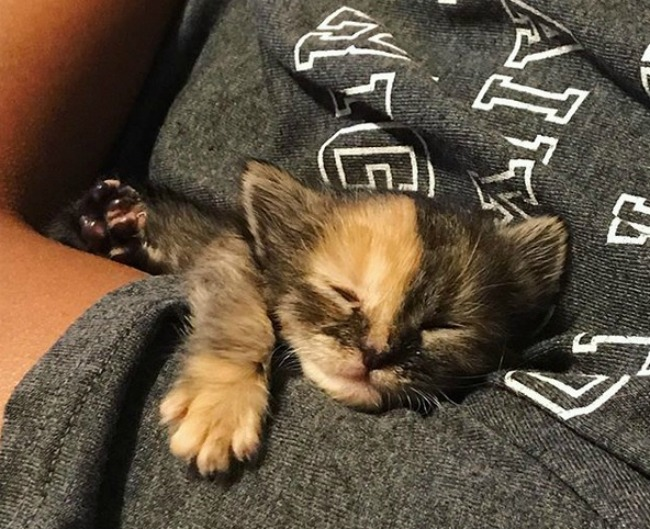 chimera-kitten-rescue