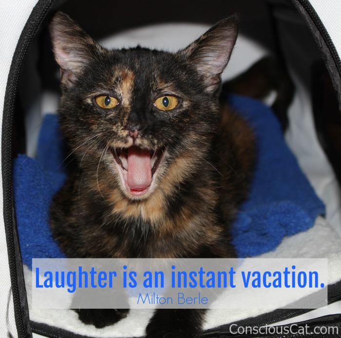 laughing-tortoiseshell-cat