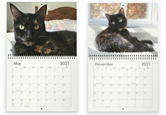 conscious-cat-wall-calendar