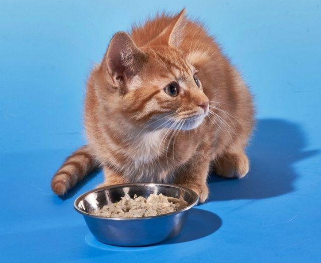 cat-food-dish