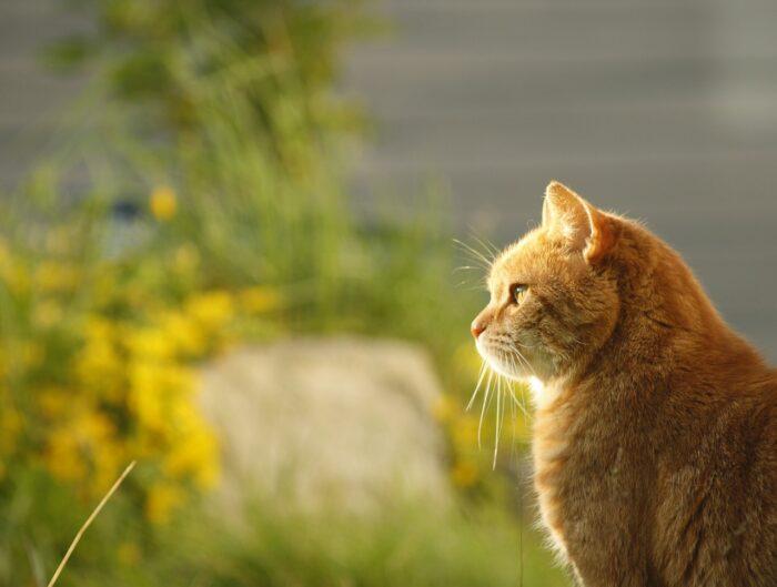 cat-fresh-air
