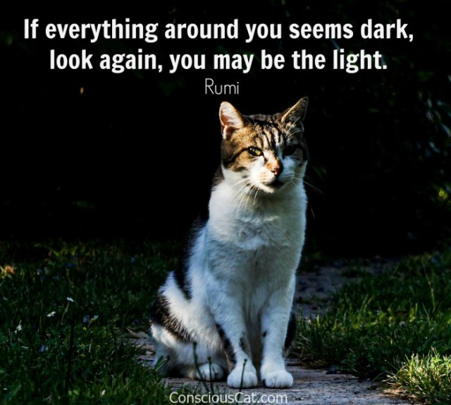 cat-dark-light