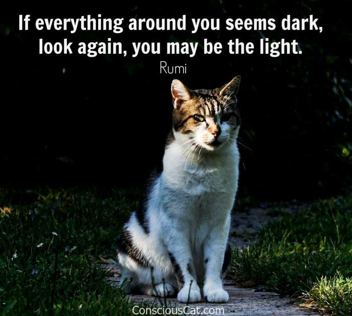 cat-dark-light