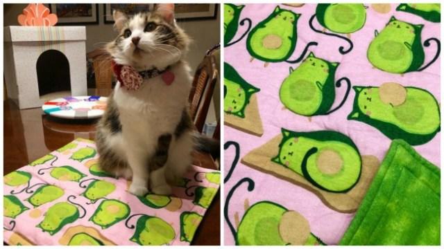 cat-blanket-avocados