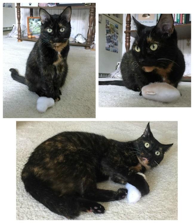 silver-vine-cat-toys