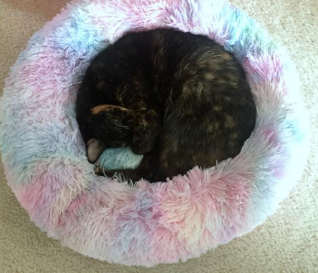 cat-sleeping-bed