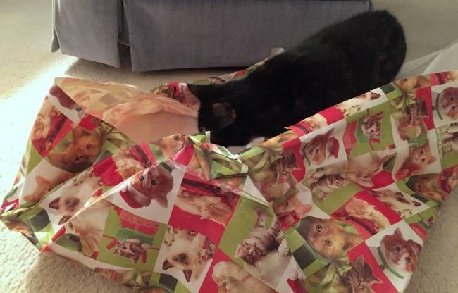 cat-gift-wrap