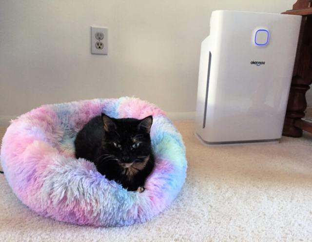 cat-air-purifier