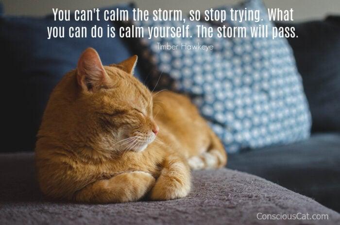 cat-calm