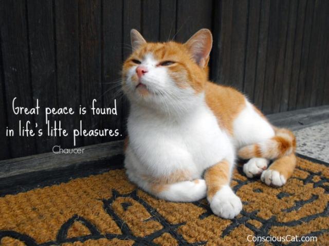 cat-life-pleasures
