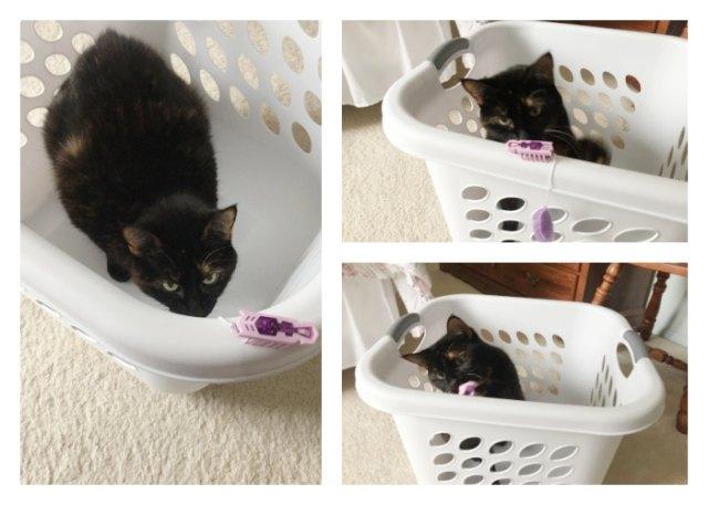 laundry-basket-hexbug