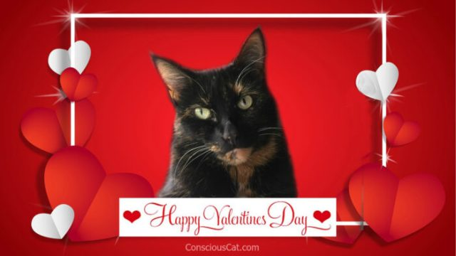 valentines-day-cat