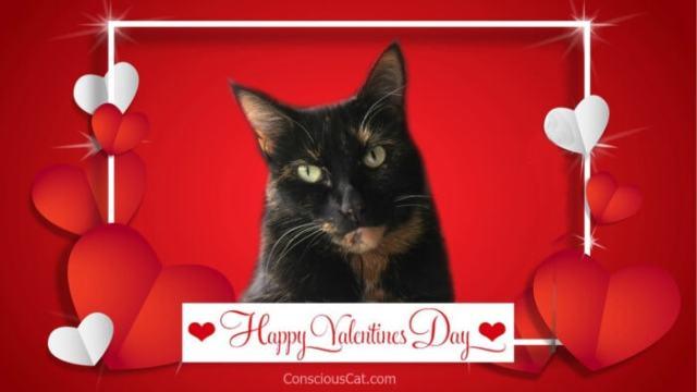 valentines-day-cat