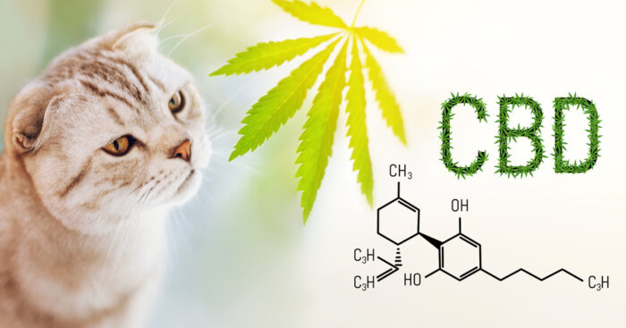 cannabis-for-cats