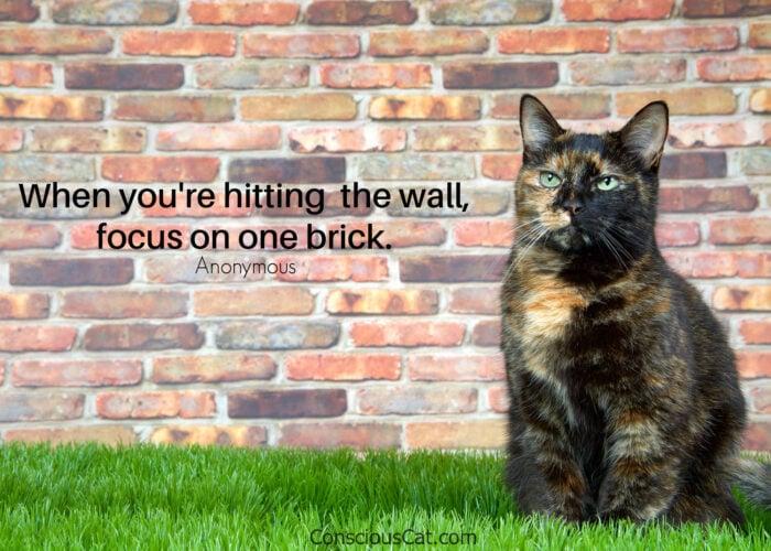 tortoiseshell-cat-brick-wall