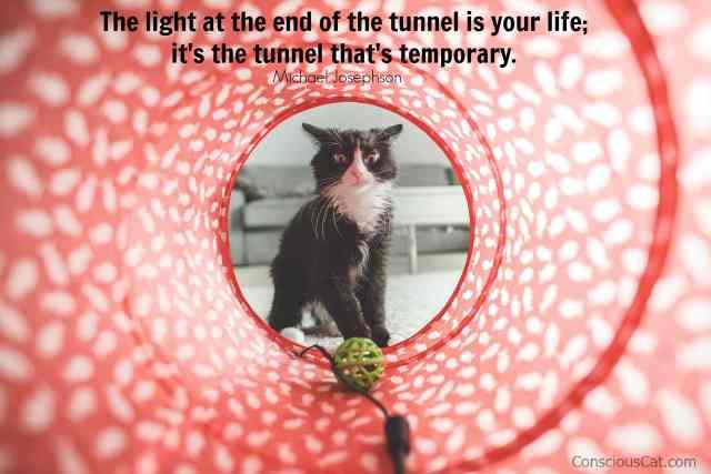 tunnel-light-cat