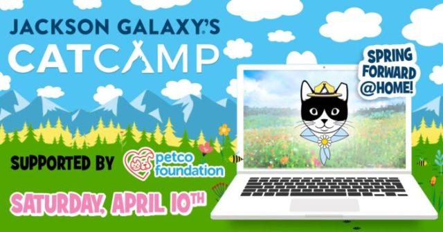 Cat-Camp-Spring-2021