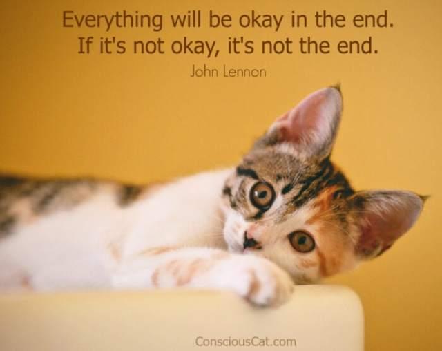 cat-everything-okay