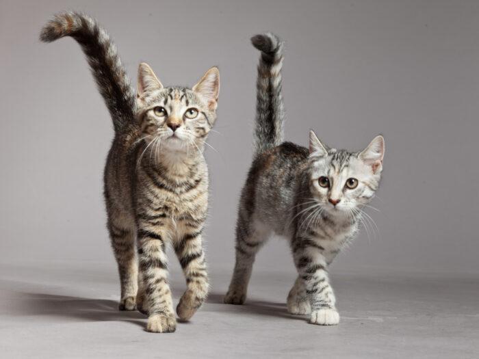 feline-life-stages-cat-kitten-adult-senior